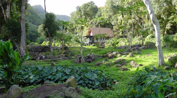 Chicken Skin in Kahakuloa Village