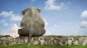 elephant-and-child-s-friendship-free-desktop-598x336