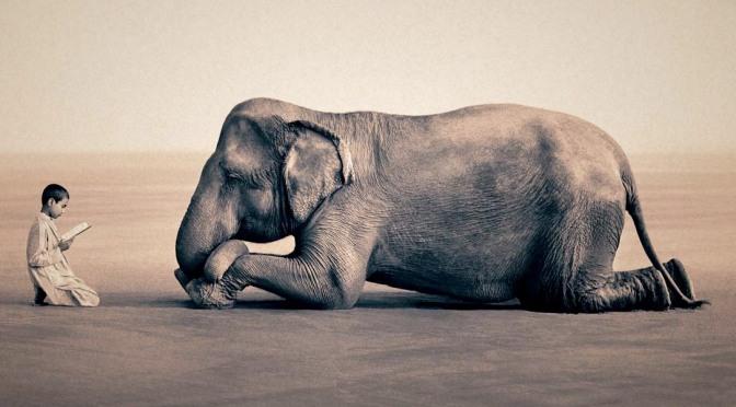 Elephant Tethers and Abundance